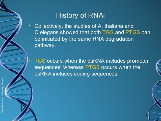 rna interference applications in medicine