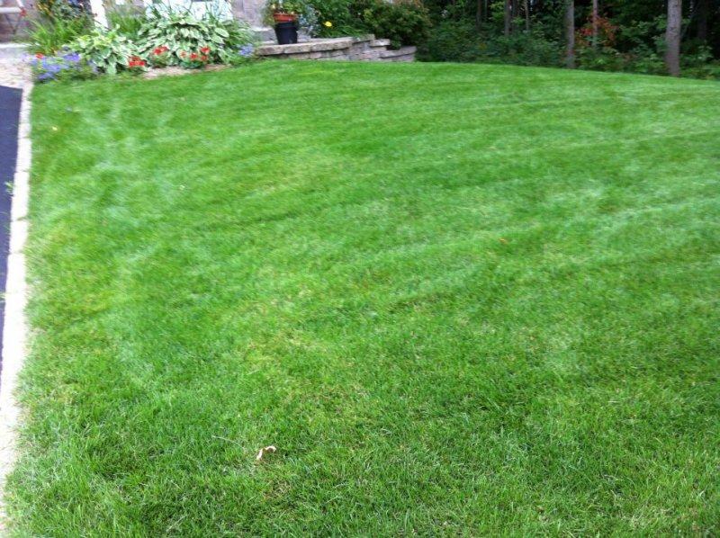 application de chaux sur la pelouse