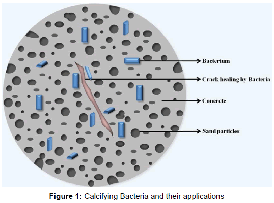 application of microbes in biotechnology